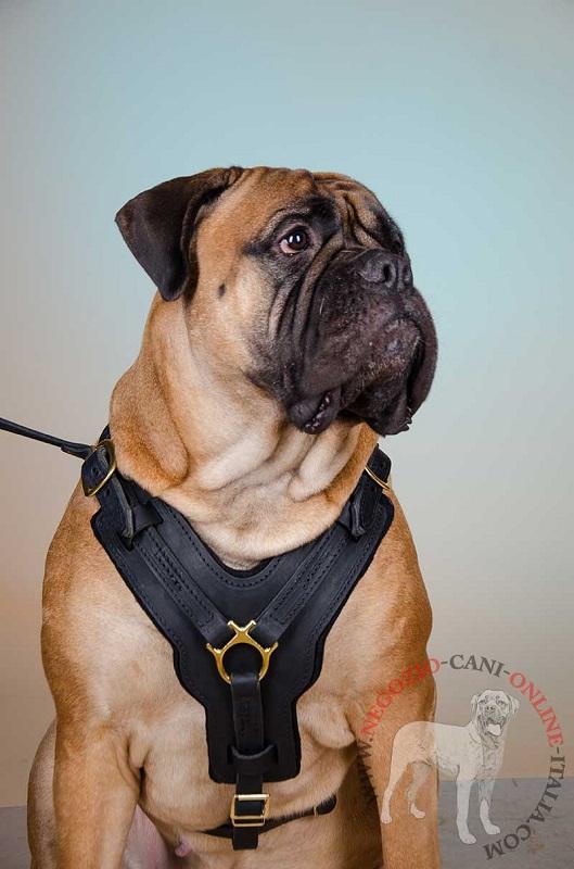 Pettorina per bullmastiff pettorina in pelle 79 8 for Recinto per cani taglia grande