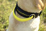 "Collare in nylon con maniglia ""Strong link"" per Labrador"