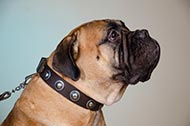 "Collare in pelle con decorazioni ""True Jewel"" per Bullmastiff"