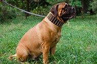 "Collare in pelle largo 7 cm ""King Style"" per Bullmastiff"