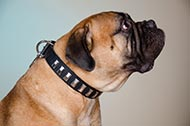 "Collare in pelle ""Necklace"" per passeggiate con Bullmastiff"