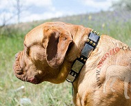 Collare con decorazioni stile vintage per Dogue de Bordeaux