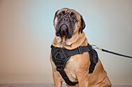 "Pettorina in nylon ""Tractive Force"" per Bullmastiff"