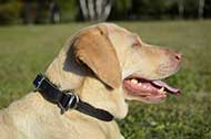 "Collare in pelle naturale ""Grass Snake"" per Labrador Retriever"