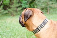 "Collare in pelle decorato ""Premium Finery"" per Bullmastiff"