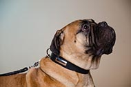 "Collare in pelle ""Strict Confidence"" per Bullmastiff"