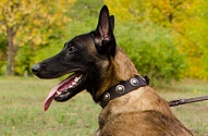 "Collare in vera pelle con decorazioni ""True Jewel"" per Malinois"