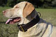 "Resistente collare doppio ""Double-layer"" per Labrador Retriever"