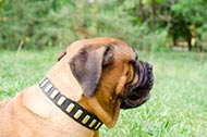 "Collare in pelle ""Lead a life of luxury"" per Bullmastiff"