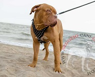 Pettorina in pelle con borchie a punta per Dogue de Bordeaux