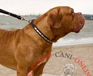 Collare in pelle di tanto stile per Dogue de Bordeaux