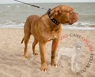 Collare in cuoio decorato con piramidi per Dogue de Bordeaux