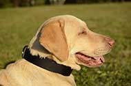 "Classico collare in nylon ""Modesty"" per Labrador Retriever"