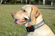"Collare in nylon ""Special Friend"" per Labrador Retriever"