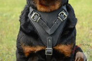"Pettorina in pelle naturale ""Working dog"" per Rottweiler"