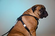 "Pettorina in pelle decorata ""Voltage spike"" per Bullmastiff"