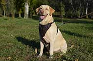 "Pettorina in pelle naturale ""Working Dog"" per Labrador Retriever"