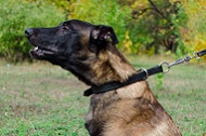 "Collare regolabile in pelle ""Grass Snake"" per Malinois"