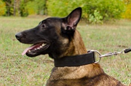 "Collare classico ""Laconic Austerity"" largo 50 mm per Malinois"