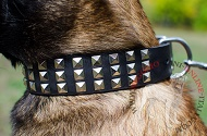 "Collare in pelle con piramidi ""Premium Finery"" per Malinois"