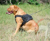 Comoda pettorina in nylon per Dogue de Bordeaux