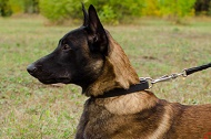 "Collare in cuoio ""Noble Pet"" largo 25 mm per Malinois"
